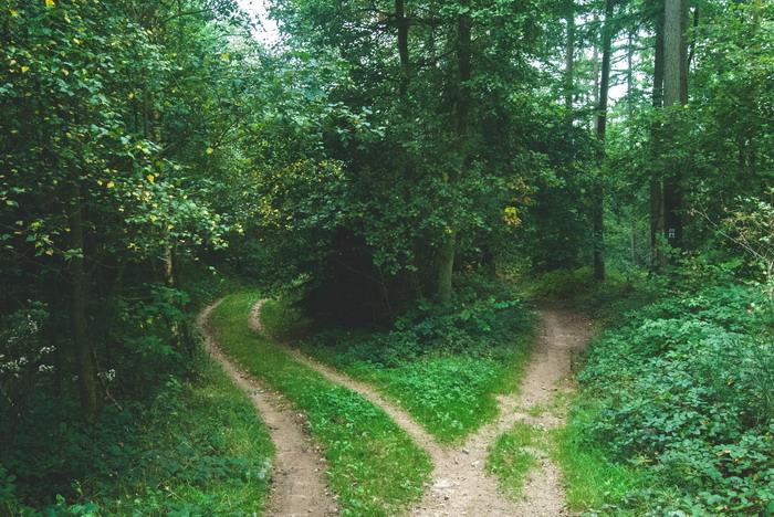 Erdőben útelágazás